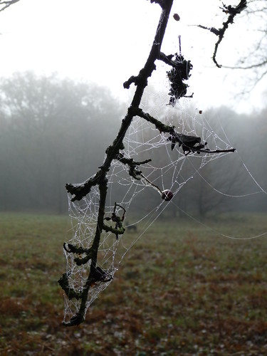 Webs on the Branch