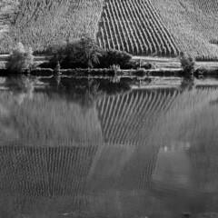 RIVES DE LA MOSELLE. (Philou II) Tags: bw monochrome digital reflections square landscapes noiretblanc lacs allemagne reflets paysages navigation carr fleuves borddeleau vieaquatique
