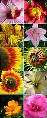 flora (amiMaija (Anne Brown Photography)) Tags: taino naturesfinest ultimateshot wowiekazowie tainotribe onlythebestare