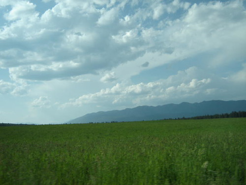 Field near Whitefish.