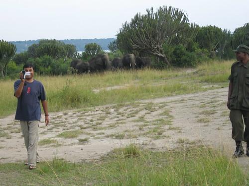Uganda - QENP Elephants Daring to Film