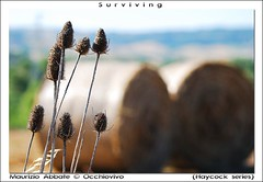 Surviving - by occhiovivo