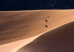 Ravens (Jeffrey Sullivan) Tags: park travel usa bird jeff nature birds coral landscape utah sand desert state dunes roadtrip 2006 sullivan raven ravens zionbrycecanyonarea visitutah