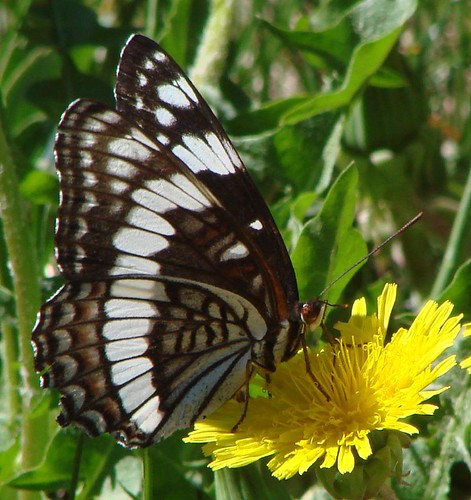 "butterfly • <a style=""font-size:0.8em;"" href=""http://www.flickr.com/photos/10528393@N00/1040399447/"" target=""_blank"">View on Flickr</a>"