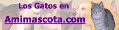 Amimascota.com, Todo para tu mascota