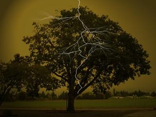 Lightening Striking an Oak Tree
