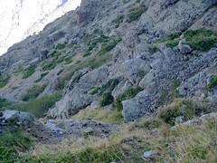 Sur la vire de l'Andatone (Scaffone) versant Scaffone : un des couloirs d'accès à la vire