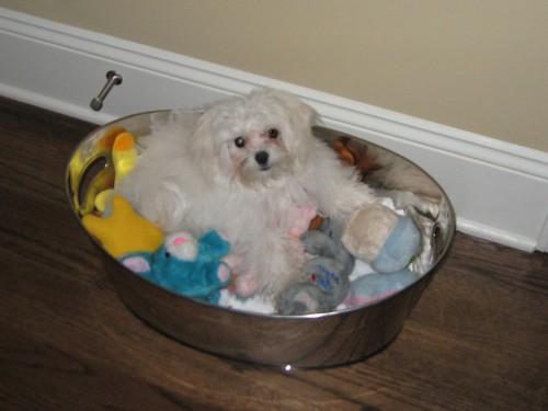 hahahahaha!!  Casper climbed into his toy box and just laid down!