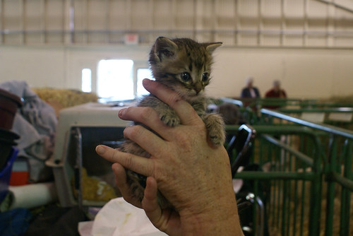 baby-kitty