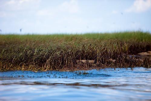 20100617-tedx-oil-spill-0652