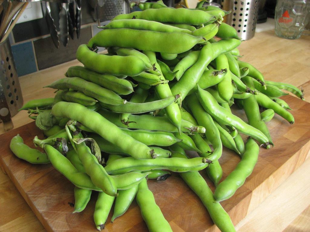 fava bean harvest