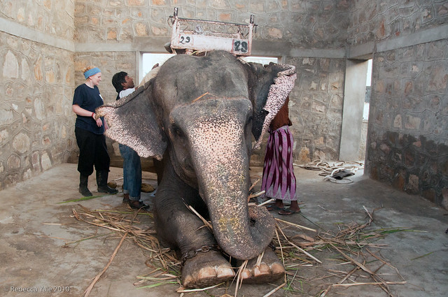 RYALE_Elephant_Village-46