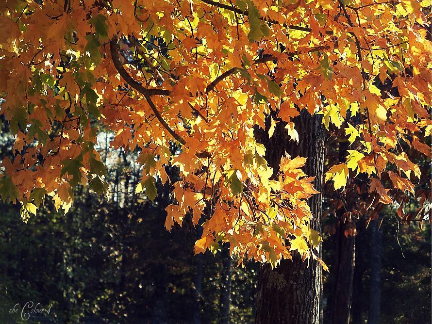 ph_fall colors