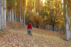 nagar , pakistan (TARIQ HAMEED SULEMANI) Tags: autumn pakistan tourism nature water trekking canon hiking hunza tariq nagar gilgit concordians sulemani