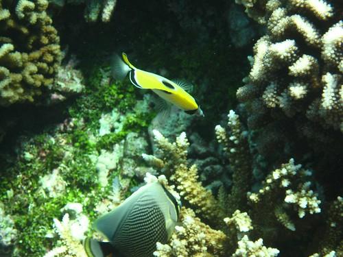 Tetmanu fish 9