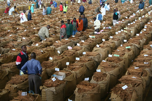 Tobacco Auctions in Malawi