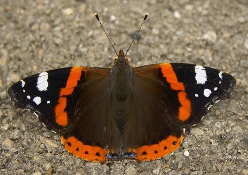 45 Mariposa