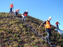 Descending the dome (BillyRayVirus) Tags: renzopiano greenroof academyofsciences greenarchitecture