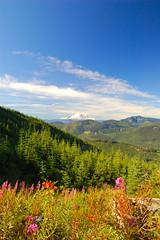 Floral Rainier (TQWestphal) Tags: mountain lake d50 landscape outdoors washington nikon state pacific northwest hiking lakes climbing alpine backpacking wilderness rampart
