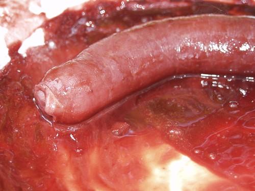 Uncircumcised large penis