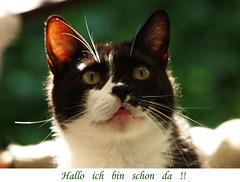 Felix (arjuna_zbycho) Tags: pet cats pets cute animal animals cat kitten feline chat felix kitty kittens olympus gato katzen haustier kater tier e500 hauskatze masterphotos bestofcats