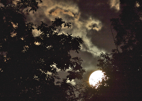 Moon set in trees