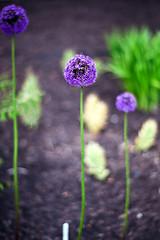 PennState Arboretum (pPolly) Tags: leica arboretum statecollege botanicalgarden rom summilux 80mm r9