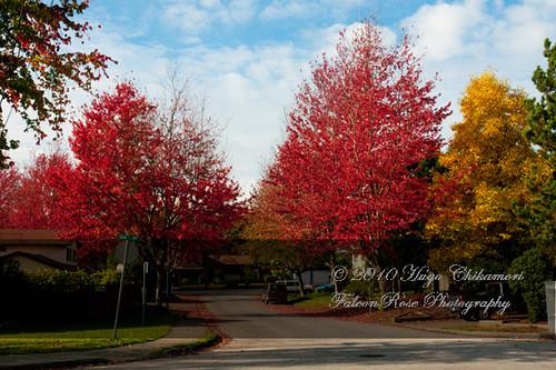 10-30-2010_fall_trees_wm