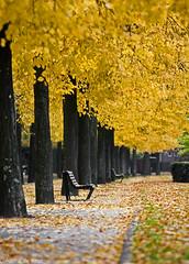 (Diederik de Regt) Tags: autumn trees orange holland color tree netherlands amsterdam yellow canon eos is bomen iamsterdam colorfull herfst nederland boom l apollo geel 70200 ef f4 oranje 2010 kleurrijk f40 laan 70200mm the kleuren apollolaan 450d
