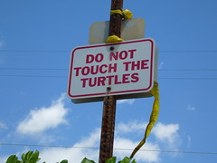 DO NOT TOUCH THE TURTLES