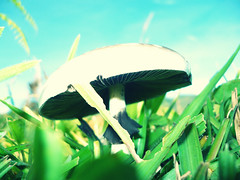 Welcome to Wonderland (-Passenger-) Tags: macro mushroom grass crossprocessed stem fungi passenger hongo