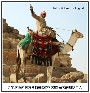 pyrimidine_camel