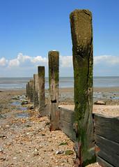 Groyne 2 (Little Egret) Tags: wood uk sea coast kent seaside coastal maritime groyne seasalter