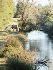 Quiet existence in the Camargue (Eleonore Indra) Tags: camera sea horse france color reflection tree water animal way cheval interestingness interesting flickr day quiet explore lonely arles couleur existence questfortherest camargue sonydsch2 eleonoreindra