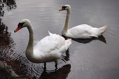 DSC_0079 (indiecraig) Tags: nottingham clumberpark upcoming:event=221261