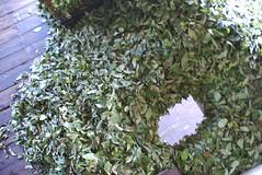 DSC_0135.jpg (crazycole2010) Tags: srilanka kandy teaplantation