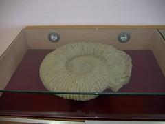 museofosiles1
