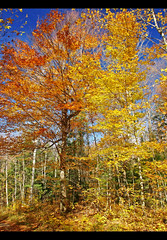 Kelly Lake (robert_goulet) Tags: blue autumn trees light red sky orange lake ontario canada colour fall nature yellow digital october afternoon shadows natural bright path walk vibrant deep vivid olympus foliage micro kelly polarizer zuiko haliburton 2010 ep1 dysart m43 zd fourthirds 1454mm mikecrough tgamphotodeskcolour