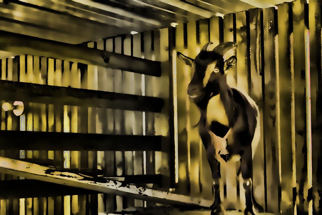 IMAGE: http://farm2.static.flickr.com/1047/5110853191_e308788a3e_b.jpg