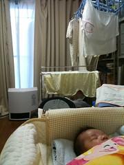 今朝のとらちゃん(11/2): 夜は寝ない子