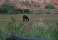 black horse (zen granny) Tags: horse utah capitolreef fruita
