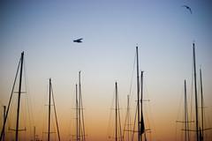 Waterfront (Ollie-G) Tags: blue sunset red sky orange bird boat tasmania mast hobart seagul