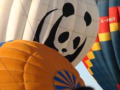 1° Open Brasil de Balonismo (Daniel Pascoal) Tags: public panda baloon ballon balloon balão 2007 balonismo balon rioclaro danielpg 1°openbrasildebalonismo bolonismo danielpascoal