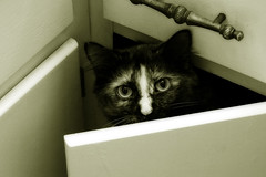 Camera Shy (Donna Tomlin) Tags: cat feline tn kitty emmy tortie soe smyrna shieldofexcellence impressedbeauty