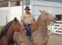 Retornando (Eduardo Amorim) Tags: horses horse southamerica caballo uruguay cheval caballos cavalos prado montevideo pferde cavalli cavallo cavalo gauchos pferd hest hevonen chevaux gaucho  amricadosul montevidu hst uruguai gacho  amriquedusud  gachos  sudamrica suramrica amricadelsur  sdamerika supershot   americadelsud impressedbeauty aplusphoto  americameridionale semanacriolla semanacriolladelprado eduardoamorim