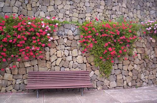 Geranium Cascade