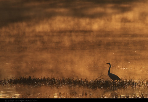 bird egret creek mist sunset santabarbara photofool