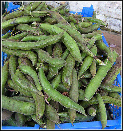 broad beans copy