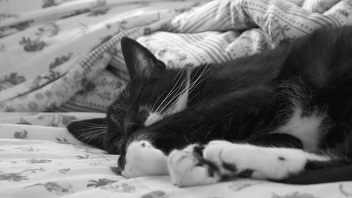 sleeping beastie3