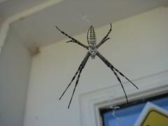 Spiderus